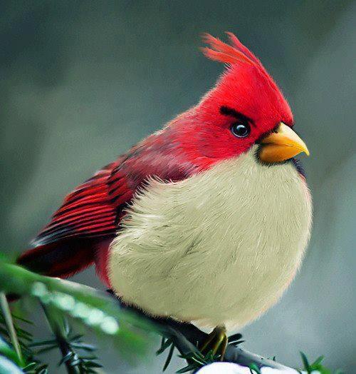 Real life Angry Birds