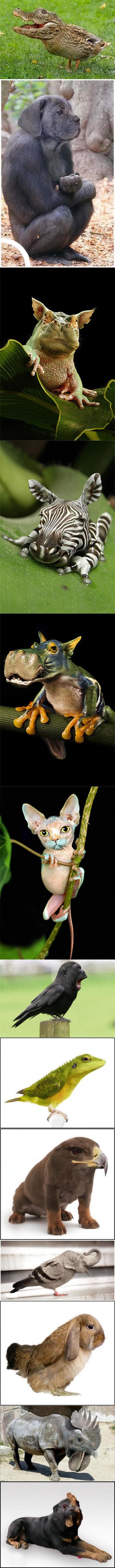 Animal Photoshop Hybrids