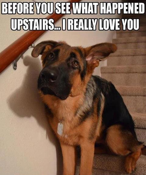 Before you see what happened upstairs...I really love you.