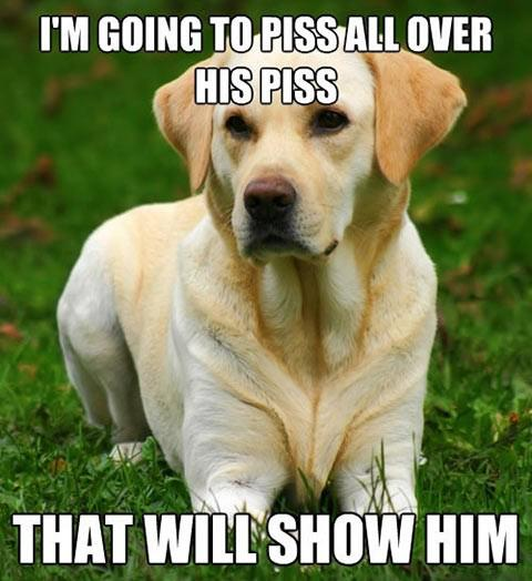 I'm going to piss all over his piss. That will show him! Dog territorial behavior.