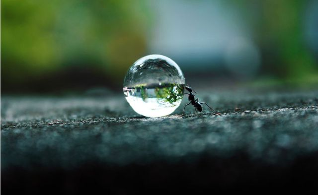 Ant vs Water Droplet