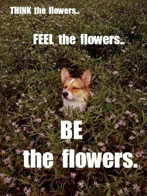 Think the flowers. Feel the flowers. Be the flowers.