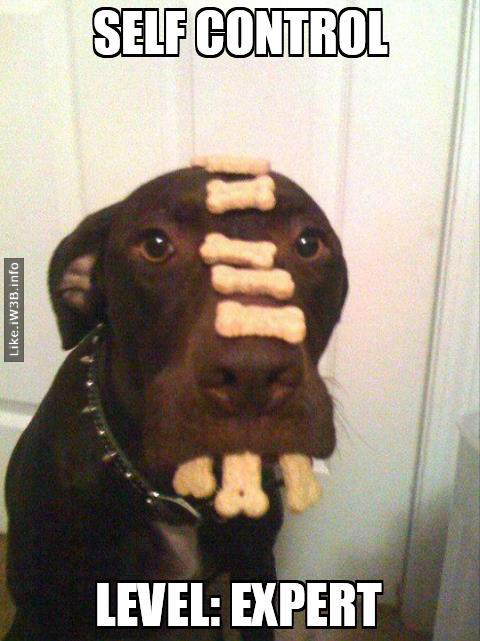 Dog - Self Control Level: Expert