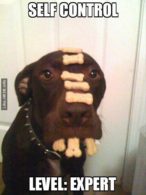 Dog - Self Control Level: Expert