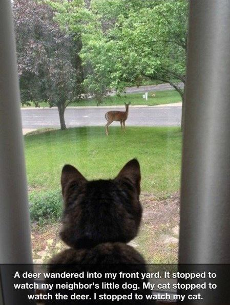 A dear cat and dog - A dear wandered into my front yard ..