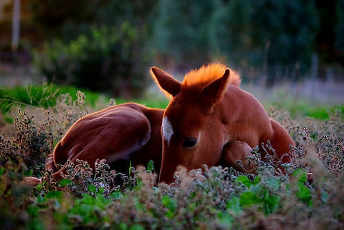 cute baby foals - photo #6