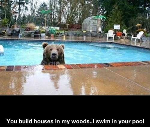 Bear - You build houses in my woods... I swim in your pool!