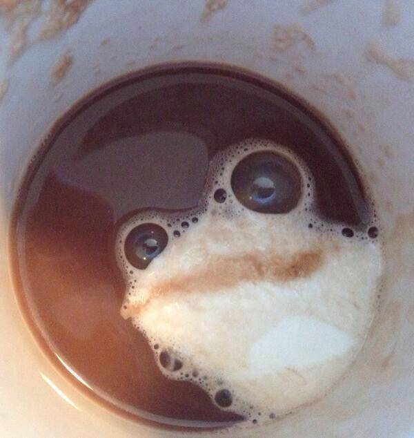Best accidental cappuccino foam frog ever.