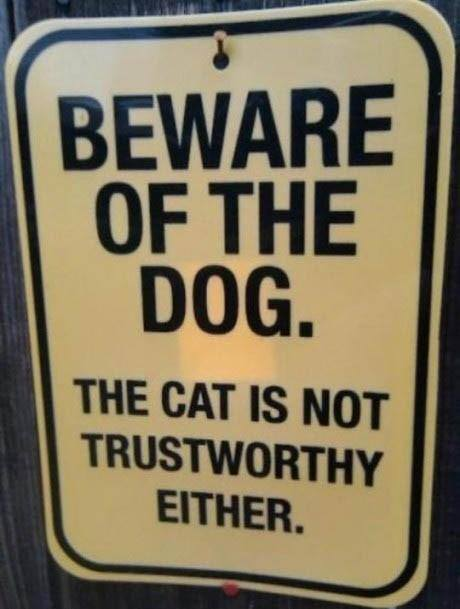 Beware of dog . The cat is not trustworthy either