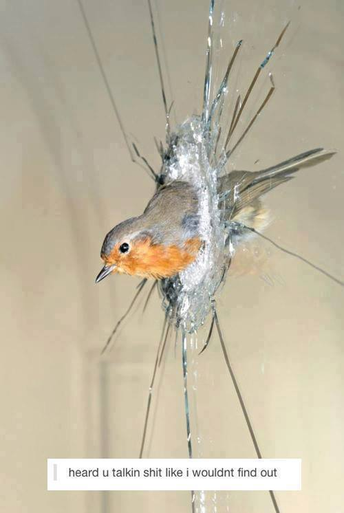 Bird breaks window glass -  Heard you talking shit like I wouldn't find out