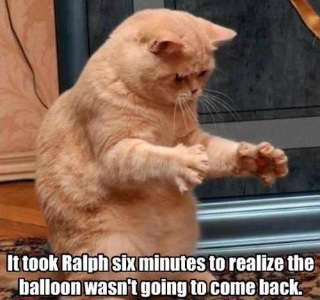 Ralph Cat Balloon Cat And Balloon Took Ralph
