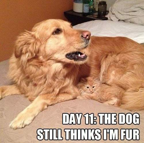 cat_and_dog_day_11_the_dog_still_thinks_