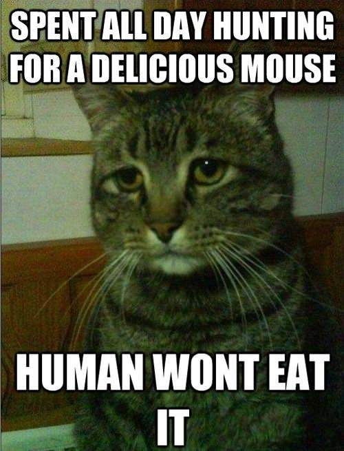 Cat - Spent all day hunting for a delicious mouse..