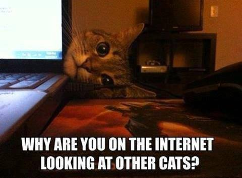 Cat - Why are you on the Internet looking at other cats ?