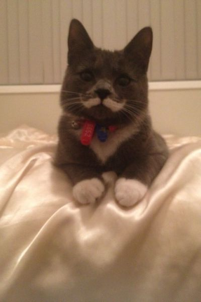 Cat with real moustache