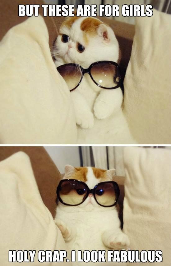Cat with sunglasses -  But these are for girls . Holy crap, I look Fabulous !