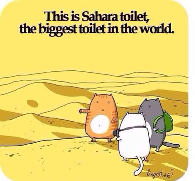 Cat's at vacation. Sahara toilet!