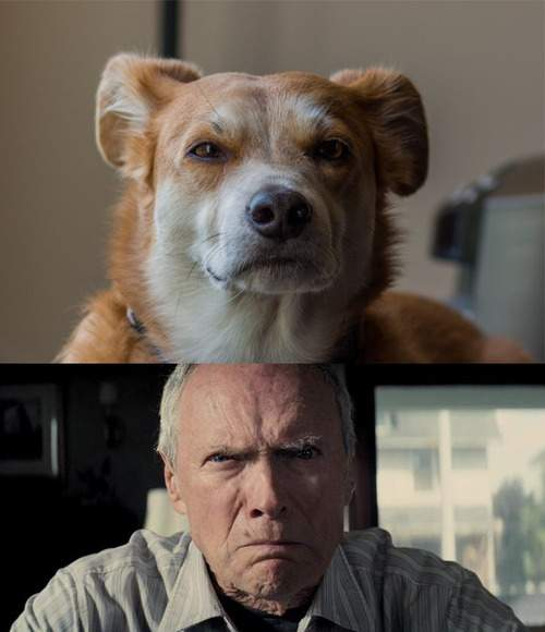 Clint Eastwood and dog look alike