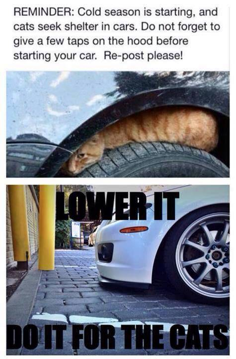 Cold season is starting, and cats seek shelter in cars.