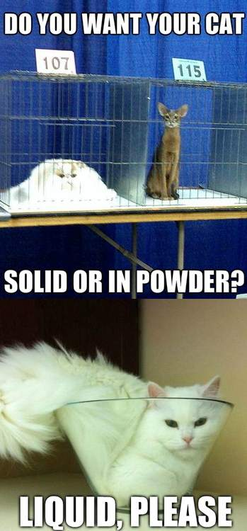 Do you want your cat Solid or in powder?