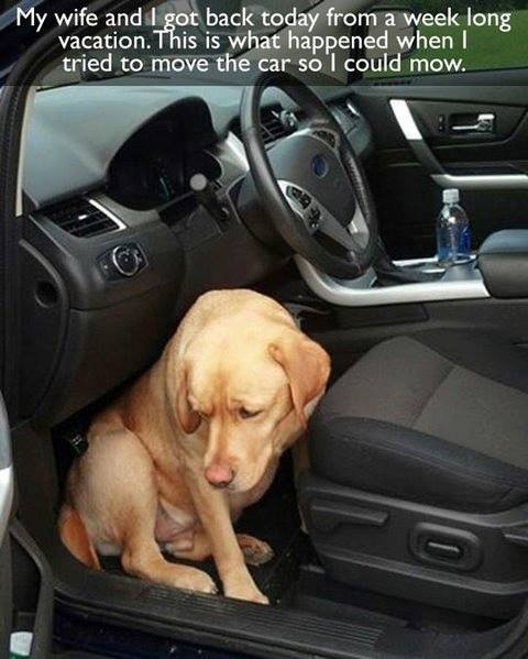 Dog afraid that owner will leave him home again if he enters the car !