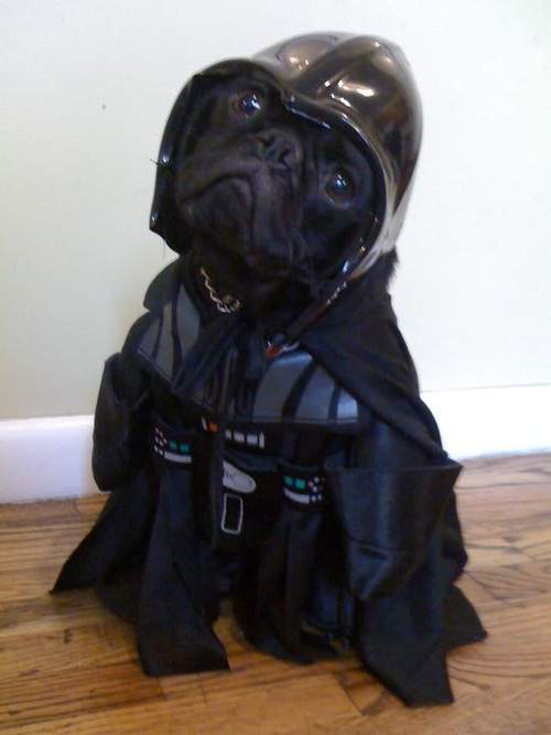 dog_costume_darth_vader__2013-07-21.jpg