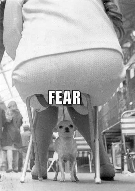 Dog - Face of fear !