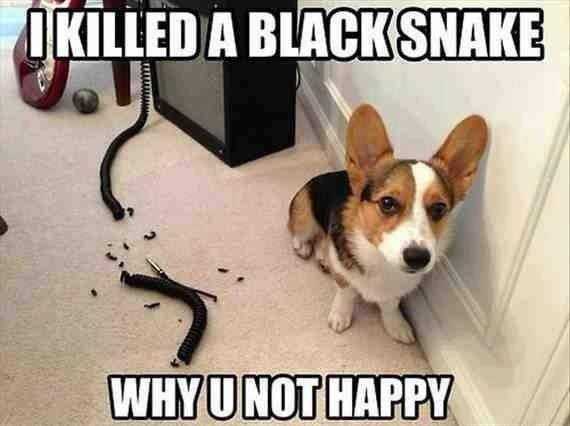 Dog - I killed a black snake. Why U not happy?