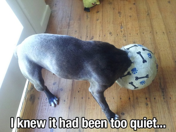 Dog stuck in ball - I knew it had been too quiet