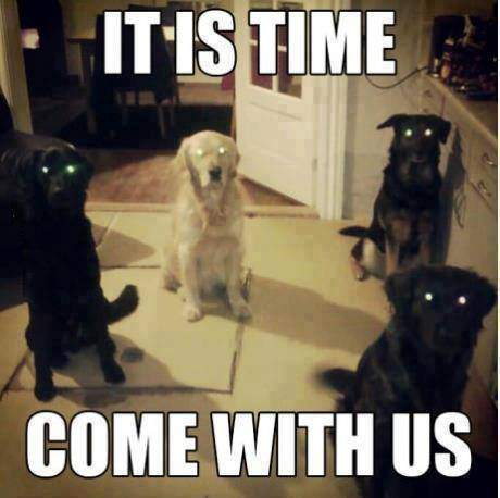 Dogs - Its time come with us!