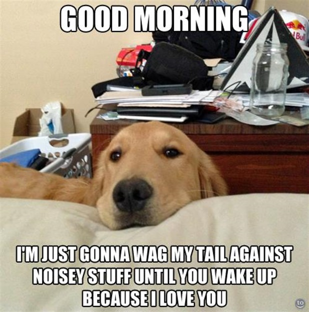 Dog -  Good morning I'm just gonna wag my tail against noisy stuff until you wake up because I love you