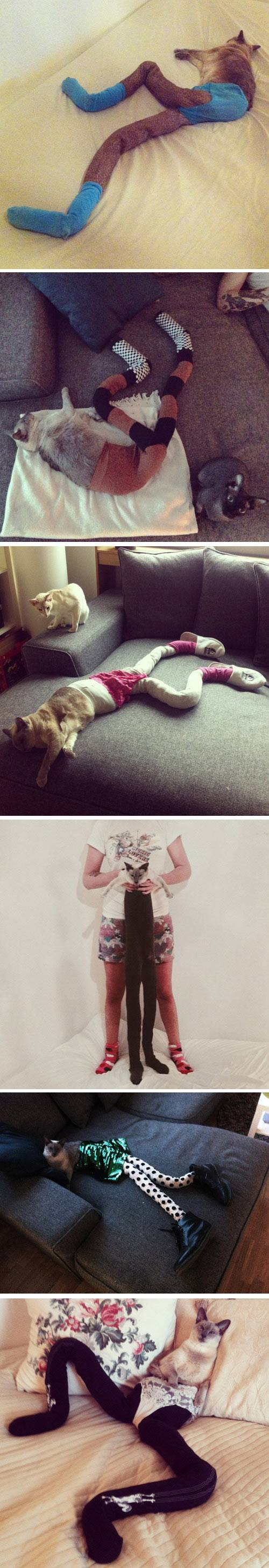 Just a cats wearing tights.