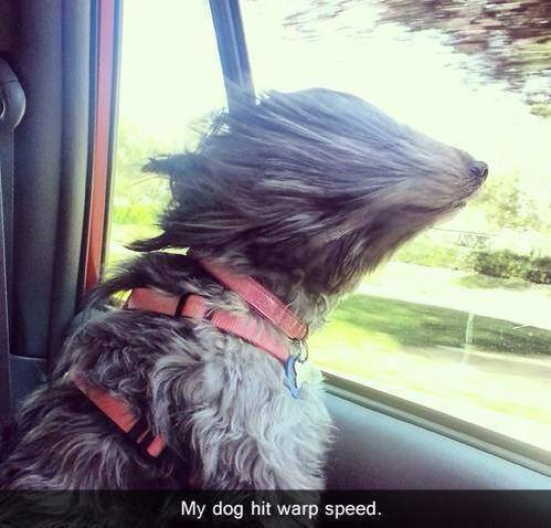 My dog hit warp speed