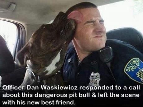 Officer Dan Waskiewicz responded to a call about this dangerous pit bull and left the scene with his new best friend.