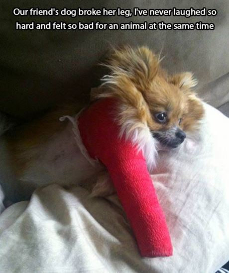 Our friend's dog broke her leg, I've never laughed so hard and felt so bad for an animal at the same time