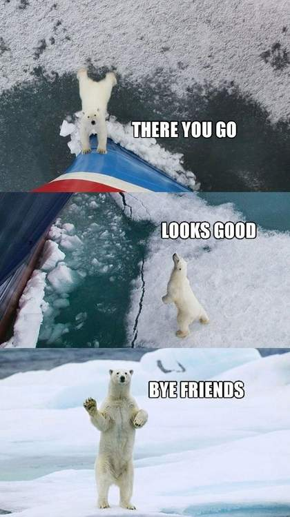 Polar bear saved stranded ship!