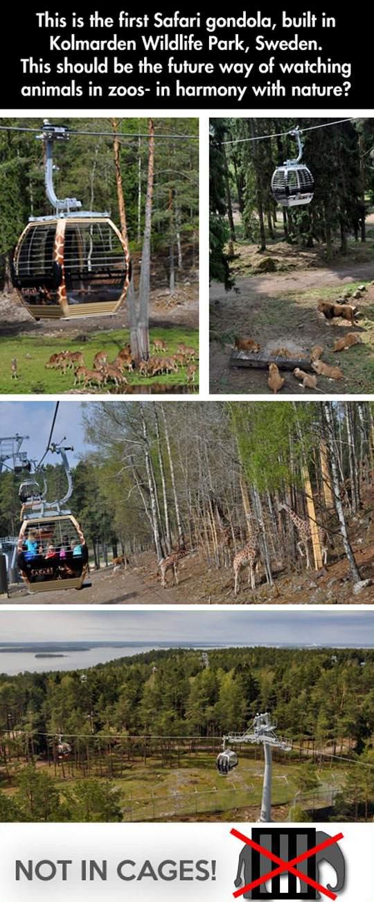Safari gondola! Amazing
