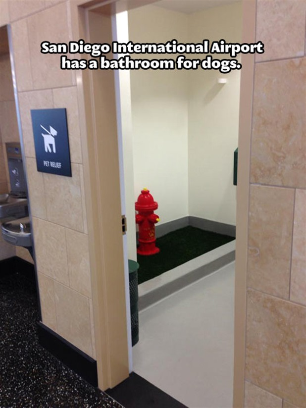 San Diego International Airport has a bathroom for dogs