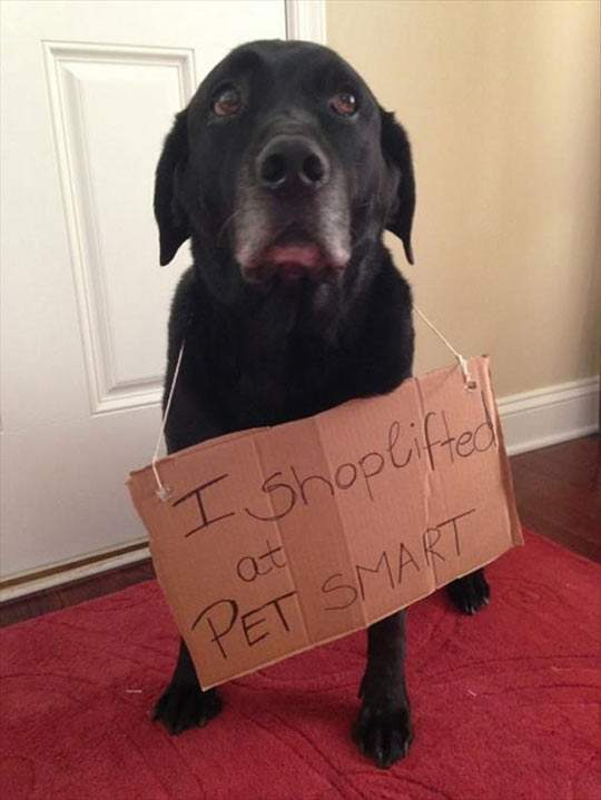 Shoplifter dog