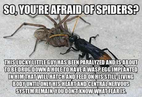 So you're afraid of spiders ? Read this and you'l feel better !