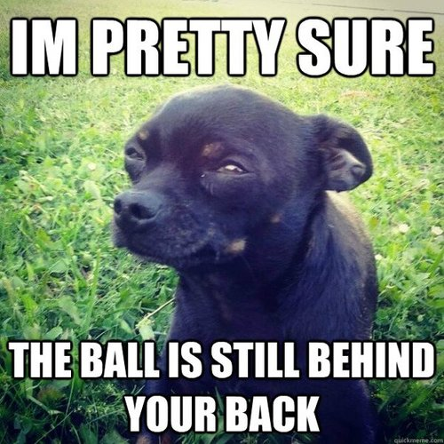 Suspicious Dog - I'm Pretty Sure The Ball Is Still Behind Your Back
