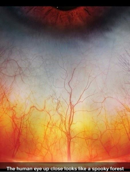 The human eye (sclera) close looks like a spooky forest