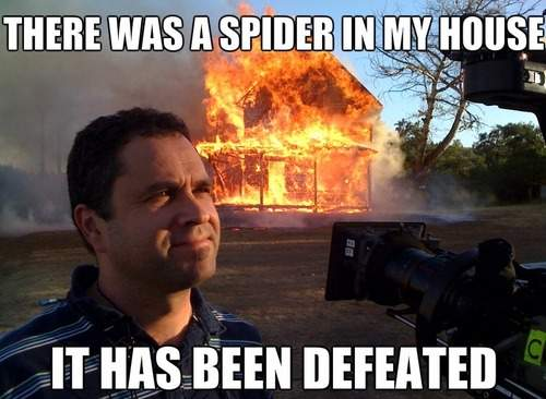 There was a spider in my house it has been defeated