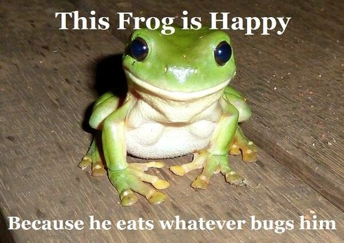 This frog is happy because he eats whatever bugs him