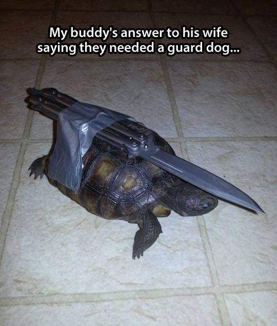 Turtle with knife on his back!