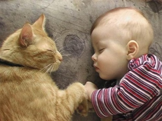 Two best friends holding hands while sleeping - Cat and Kid