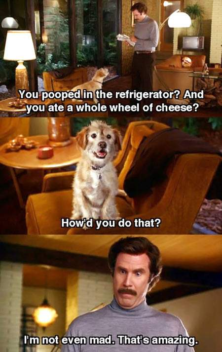 http://9buz.com/content/uploads/images/August2014/will_ferrell_and_pooping_dog_2013-08-09.jpg