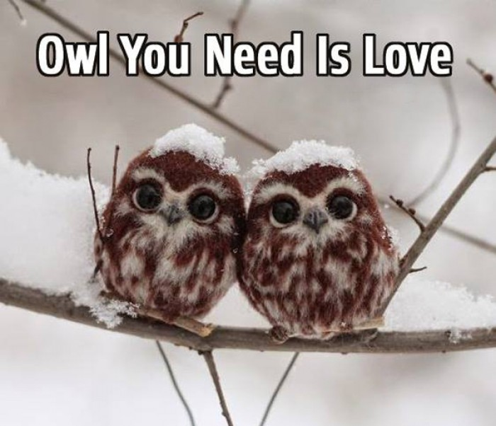 Owl your need is love