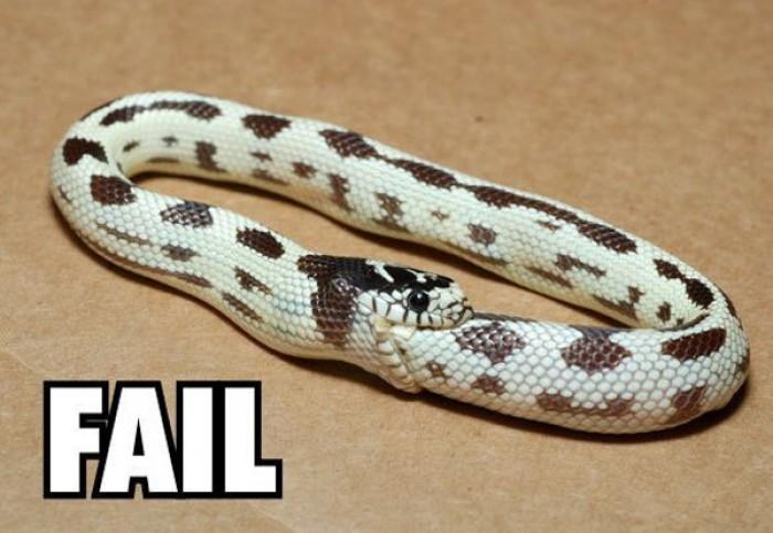Snake fails