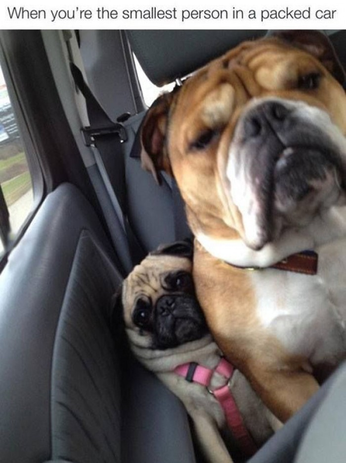 When you are the smallest person in a packed car